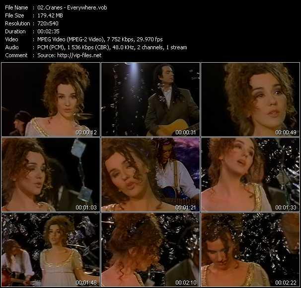 Cranes video screenshot