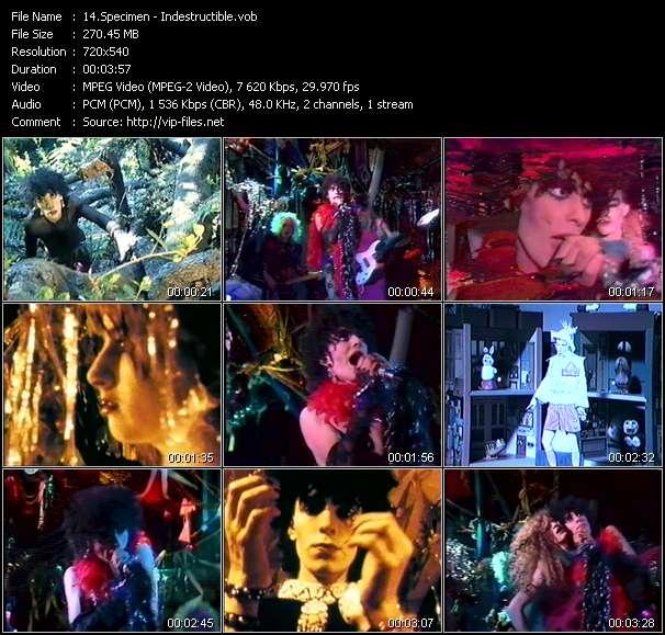 Specimen video screenshot