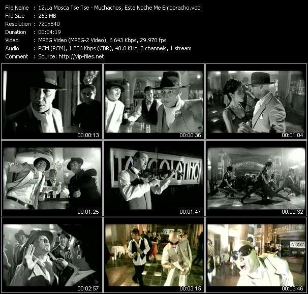 La Mosca Tse Tse video screenshot