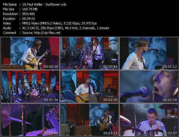 video Sunflower screen