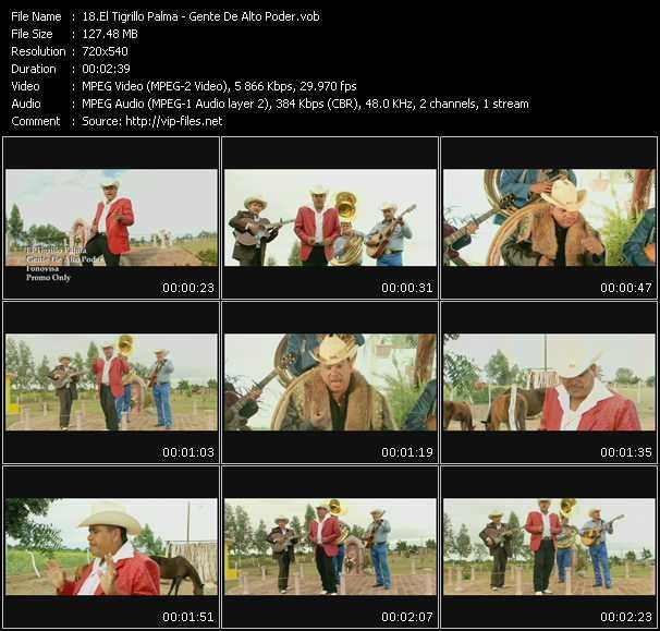 El Tigrillo Palma video screenshot