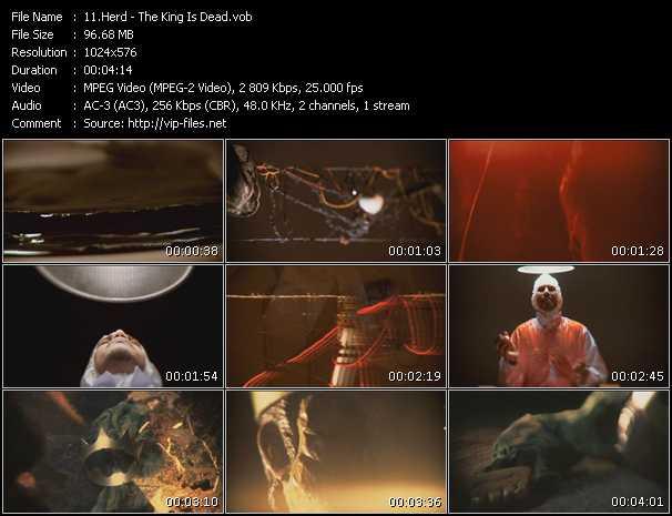 Herd video screenshot
