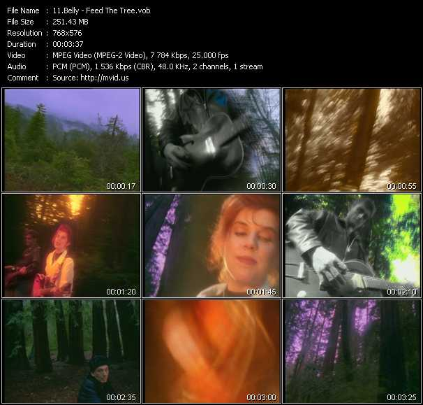 video Feed The Tree screen